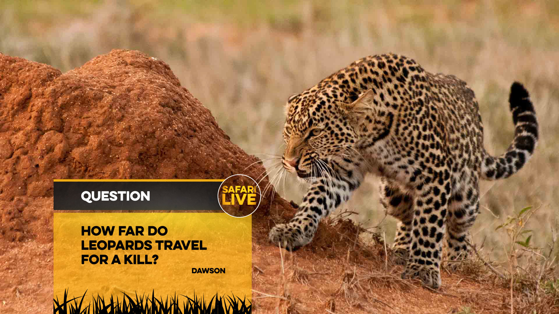 NAT_GEO_SAFARI_LIVE_QUESTION_BACKPLATES_15TH_NOV_17-2