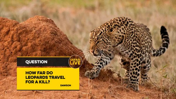 NAT_GEO_SAFARI_LIVE_QUESTION_BACKPLATES_15TH_NOV_17-3