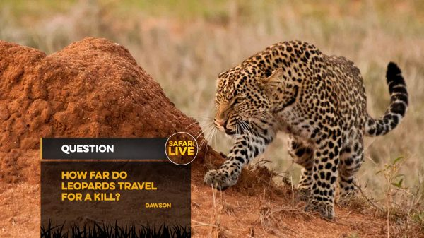 NAT_GEO_SAFARI_LIVE_QUESTION_BACKPLATES_15TH_NOV_17-5